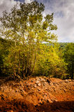 Natural Landscape With Golden Colors. Natural landscape located in Marmara region of the country Turkey with trees, rocks, stones and hills with golden colors Royalty Free Stock Photo