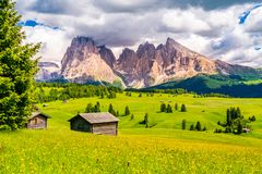 Natural landscape of the green alpine plateau Seiser Alm. And the Langkofel Group of the Dolomites with the field of beautiful flowers in sunny day in South stock photo