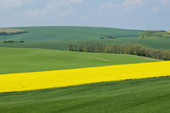 Natural landscape with green and yellow fields under blue sky Royalty Free Stock Photography