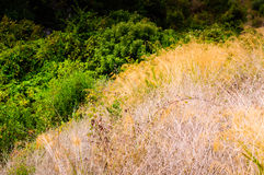 Natural Landscape On Heights Royalty Free Stock Photography