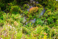 Natural Landscape On Heights Royalty Free Stock Image