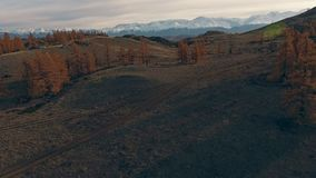 Natural landscape: mountainous snow-capped peaks, yellowed trees. Natural landscape: mountainous terrain, mountainous snow-capped peaks in the distance on the stock video footage