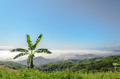 Natural landscape of mountains and sea of mist in the winter season,Thailand Royalty Free Stock Photo