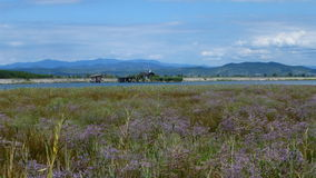 Natural landscape. A natural oasis landscape with straw and violet camp flowers, river lake and mountains Stock Photography
