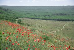Poppy glade and road to the mountains royalty free stock image