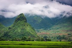 Natural Landscape of Rice Fields at Countryside, Mu Cang Chai, Vietnam. Scenery of Agriculture Farming.  stock photos