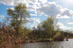 Natural landscape, springtime Royalty Free Stock Photo