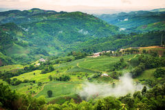 Natural landscape of tea planation on the moutain in Chaingrai p Royalty Free Stock Photo