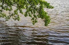 Natural landscape - a tree branch hanging above the water stock photography
