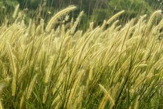 A horizontal frame of natural landscape tropical forest grass. stock photos