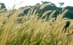 Natural landscape tropical forest  grass and hill rocks. Stock Images