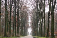 Natural landscape - view on alley in park next to the Augustusburg and Falkenlust Palaces, city of Bruhl. North Rhine-Westphalia, in Germany Royalty Free Stock Image