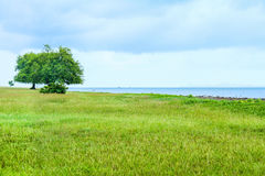 Natural landscape view of grass lawn with tree next to the bay Stock Photo