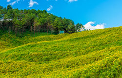 Natural landscape view of Tithonia diversifolia field Royalty Free Stock Images