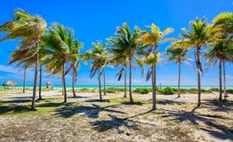 Natural landscape view of tropical palm garden leading to the beach and ocean at Cayo Coco island, Cuba Stock Photography