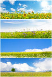 Natural landscapes. Collage with four natural landscapes Stock Photos
