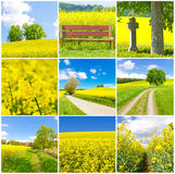 Natural landscapes. Collage with landscapes in spring time Royalty Free Stock Photography