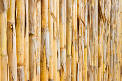 Natural lath work separation background Stock Photo