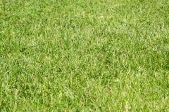 Natural lawn grass Royalty Free Stock Photos