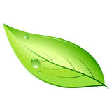 Natural leaf Royalty Free Stock Images