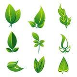 Natural leaf Stock Photos