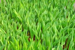Natural leaf Stock Image