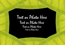 Natural leaf frame Stock Photos