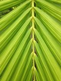 Natural. Leaf green Stock Photography