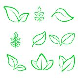 Natural leaf line icon. Young leaves of plants, forest tree oak, elm and ash leafs and eco green, garden vector isolated outline. Leafs symbol set vector illustration