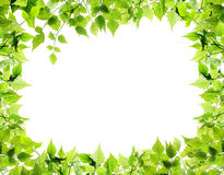 Natural leaves border Royalty Free Stock Photo