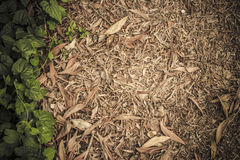 Natural leaves brown dark green wallpaper. Leave brown dark green background Royalty Free Stock Photography