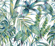 Natural leaves exotic watercolor seamless pattern. Green tropical leaves, fern, dense jungle, Hand painted botanical summer illustration on white background Stock Image