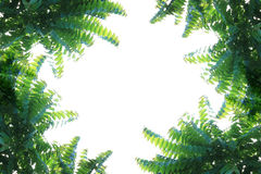 Natural leaves frame. On white background Stock Images