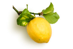 Natural lemon. Lemon with spray and leafs from organic farming royalty free stock photos