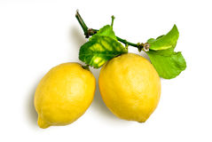 Natural lemons. Two lemons with spray and leafs from organic farming stock photo