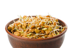 Natural lentil sprouts for raw foodists in a clay bowl Royalty Free Stock Photo