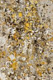 Natural lichen organisms on gravestone concrete. Organic abstract art background image. Natural lichen organisms on gravestone concrete forming a totally stock photography