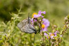 Natural life; butterfly in nature. Fauna / flora concept.  stock photos