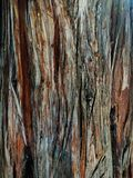 Natural light bark of old tree. stock photography