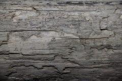 Free Natural Light Driftwood Pine Tree Texture W/ Cracks, Pitting, & Erosion Patches 4K UHD 300DPI Stock Photo - 195128360