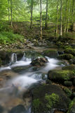 Natural light in a forest with a stream. A beautiful afternoon in the natural environment of the Carpathians Royalty Free Stock Image