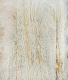 Natural light maple wood texture and background Royalty Free Stock Photography