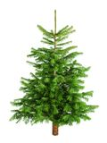 Natural little Christmas tree without ornaments. Studio shot of a fresh gorgeous Christmas tree without ornaments, isolated on white royalty free stock photos