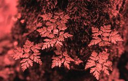 Natural Living Coral 2019 background. Fresh forest plants. stock photo
