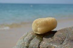Natural loofah sponge Stock Photos