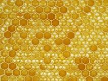 Natural looking macro shot, close up of a honeycomb stock photography