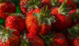 Natural looking strawberries. Royalty Free Stock Photo