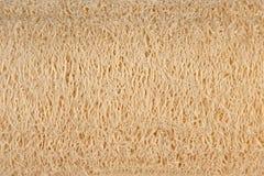 Natural luff sponge texture Stock Photos