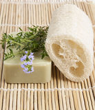 Natural luff sponge wlth thyme aromatic soap Stock Image
