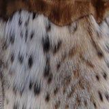 Natural lynx fur Royalty Free Stock Photos